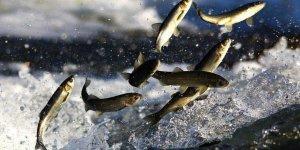 Binlerce Balık Telef Oldu!