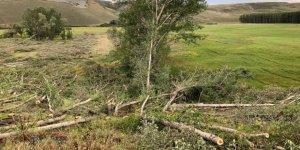 Sular Altına Kalacak Ağaçlar Kesiliyor