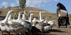 Kazlar 'Kış'a Hazırlanıyor