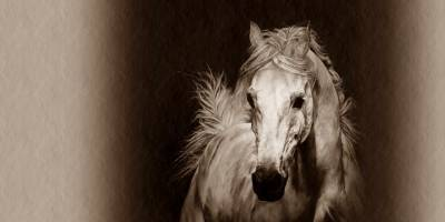 Kars'ta Yılkı Atları Doğal Ortamında