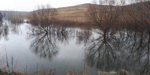 Su Altında Kalan Ağaçlar Kirlilik Yaratacak