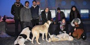'Sokak Hayvanları' İçin Seferber Oldular