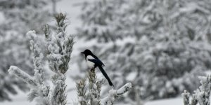 'Kar Yağışı' Ulaşımı Aksattı