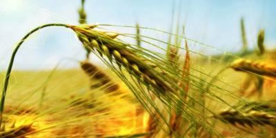 Karslı Çiftçilere 'Gübre ve Gıda' Yardımı