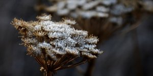 Kars Sarıkamış'ta Kırağı