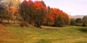 Posof'ta Sonbahar Bir Başka Güzel