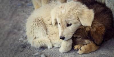 Digor'da Sahipsiz Hayvanlar Kısırlaştırılacak