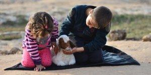 Kars'ta Baharın Müjdecisi Oğlak ve Kuzular