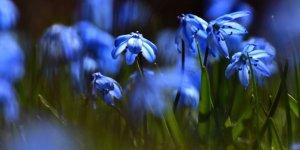 Sarıkamış'ta İlkbahar Güzelliği