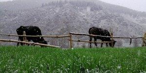Bölgenin Yüksek Kesimlerine Kar Yağdı