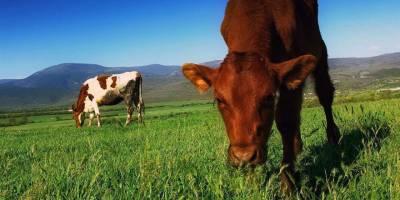 Ardahan'da Et, Süt ve Bal Üretimi Arttı