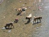 Oltu'da Balıklar Köpeklere YEM OLDU