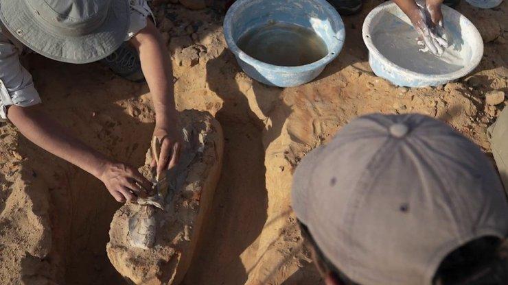 Gobi Çölü'nde 3 Yeni Dinozor Türü Bulundu