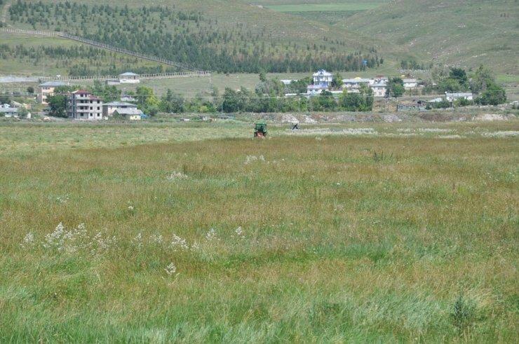 Kars'ta 'Ot Biçimi' Başladı