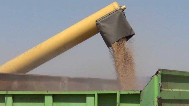 Iğdır'da Buğday Hasadı Başladı