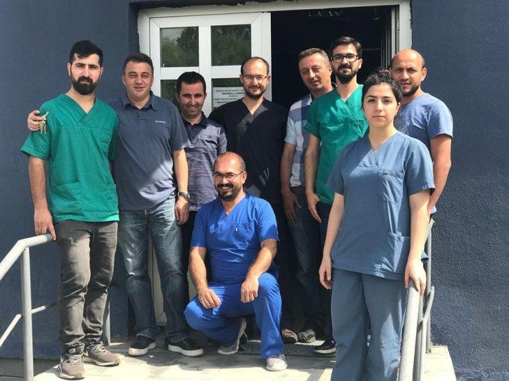 'Yavru Ayı'lar Uçakla Bursa'ya Gönderildi