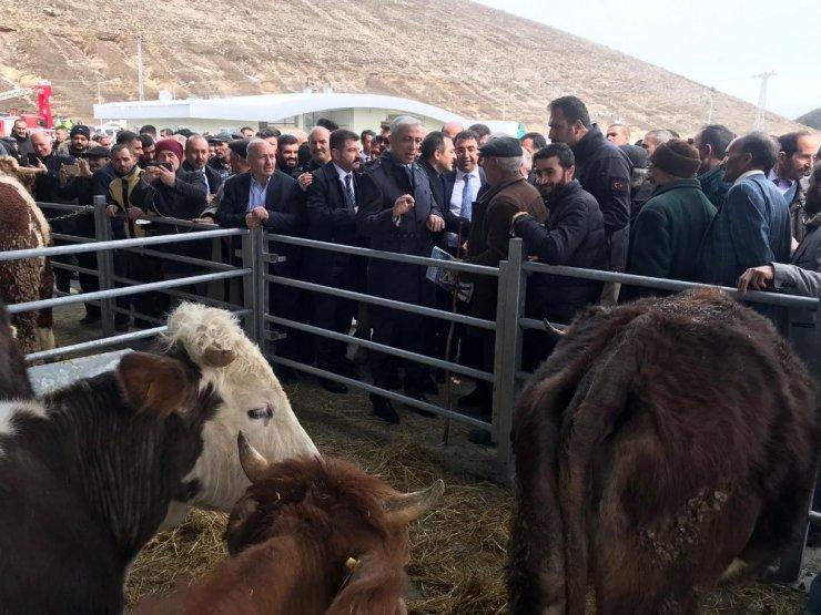 Sarıkamış'a 'Hayvan Pazarı' Yapıldı