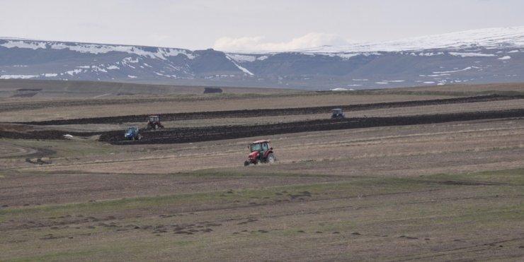 Kars'ta 'Tarla Sürümü' Başladı