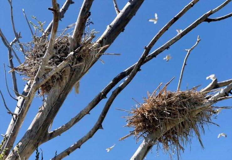 Çıldır Gölü'nün Göçmen Kuşları