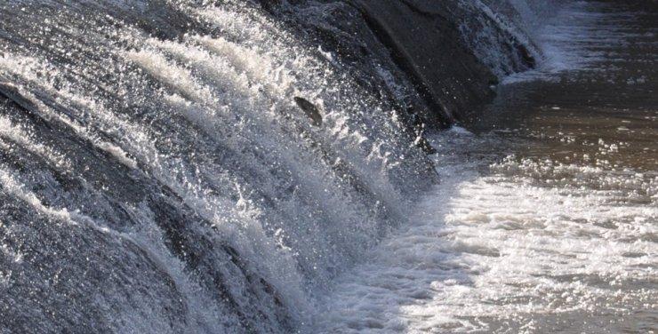 Kars'ta 'Balık' Göçü Başladı