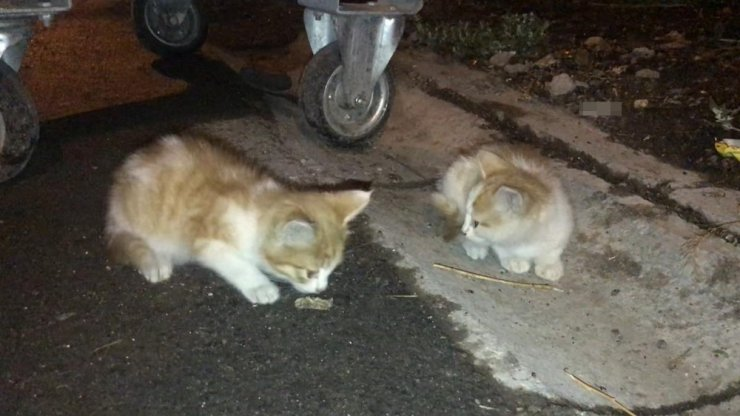 'Yavru Kedileri' Kurtarma Operasyonu