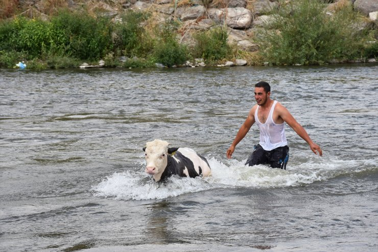 Hayvanları 'Akarsu'da Serinletiyorlar