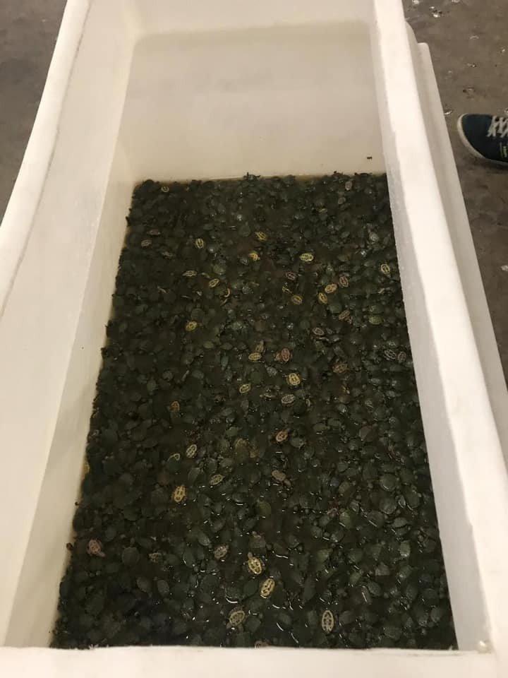 Sarp'ta Kaplumbağa Operasyonu