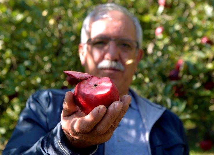 'Posof Elması'na Coğrafi İşaret Tescili