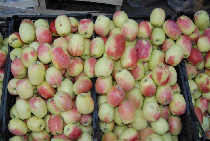 Tescilli 'Uzun Elma' Pazara İndi