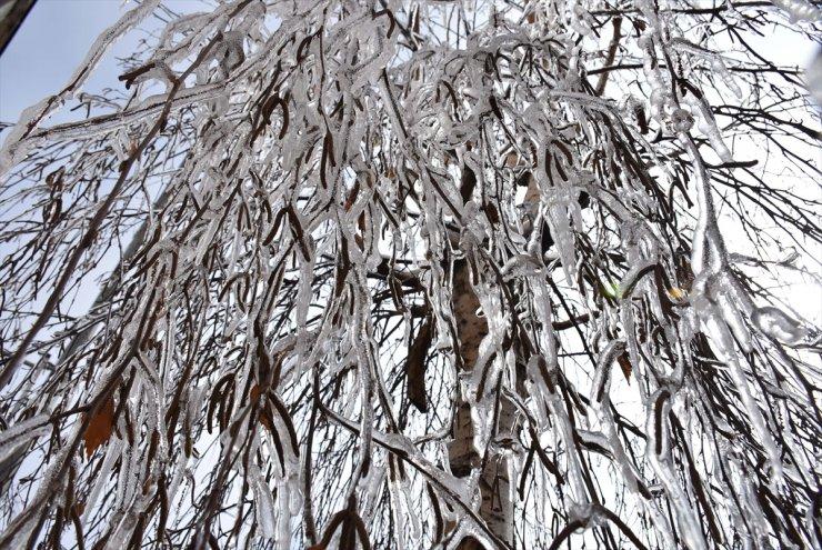 Kars'ta Ağaçların Dalları Buz Tuttu