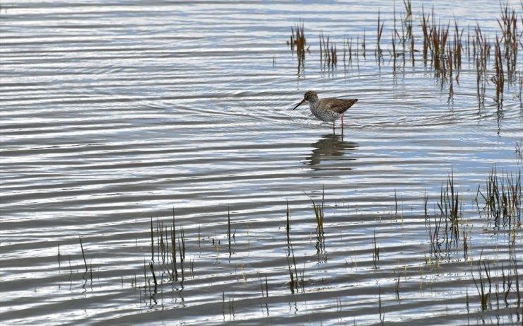 Sarıkamış'ta 'Saklı Cennet': Asboğa Gölü