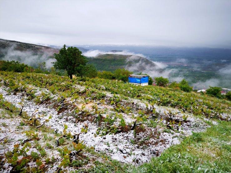 Erzincan'da Üzüm Bağları Kar Altında