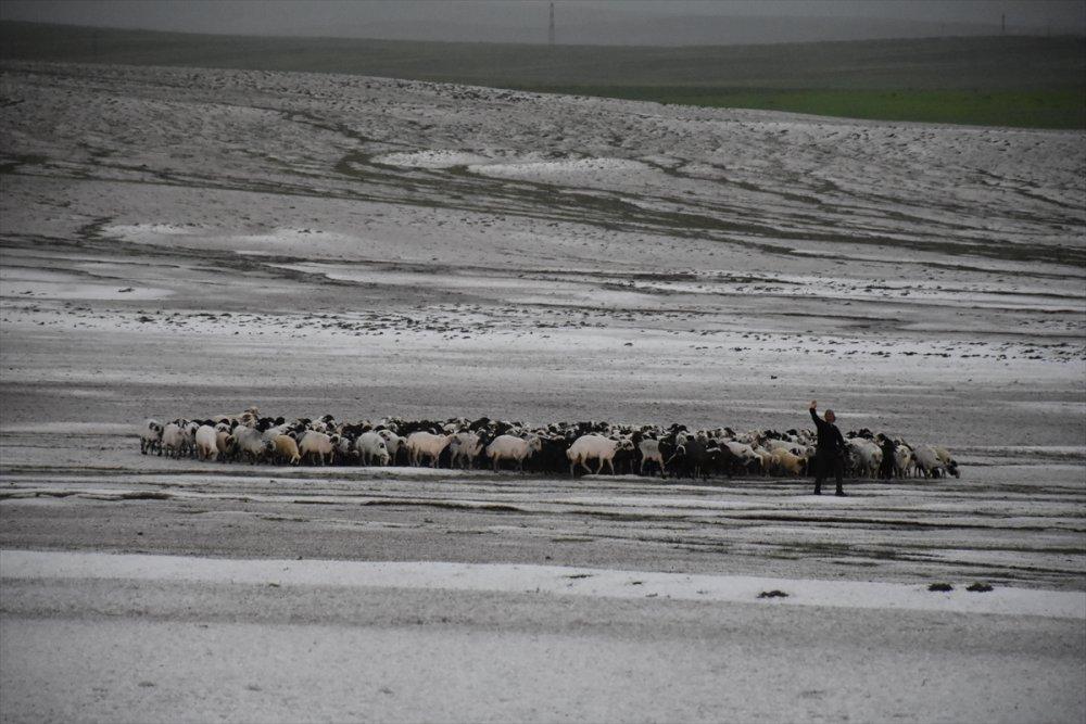Kars'ta Dolu Nedeniyle 50 Küçükbaş Hayvan Telef Oldu