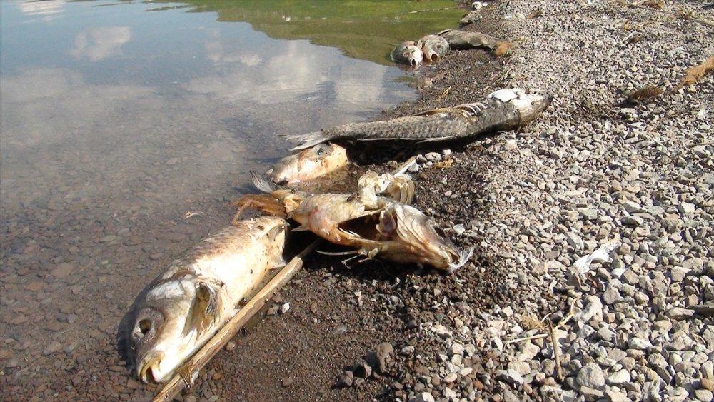 Deniz Gölü'ndeki Balık Ölümlerine İnceleme