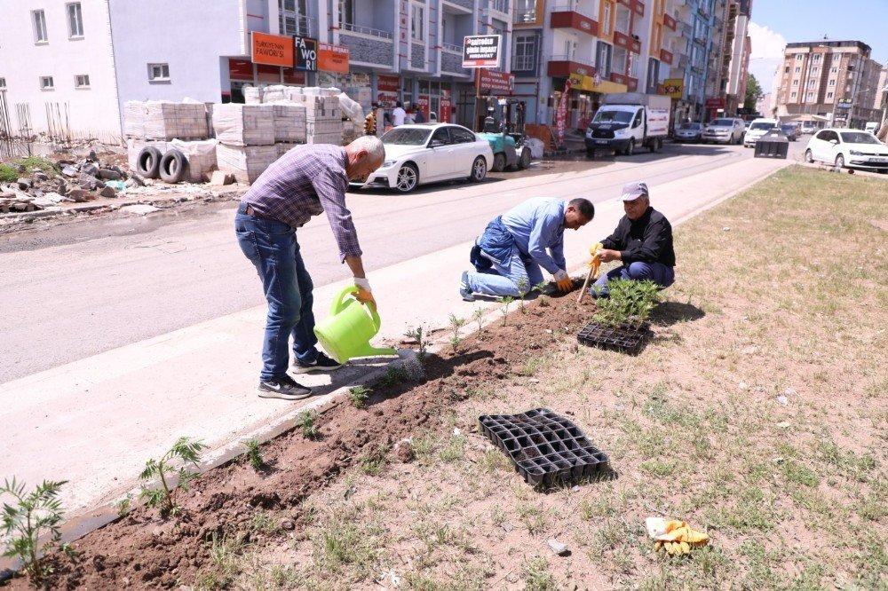 Kars Belediyesi Refüj Peyzaj Düzenliyor
