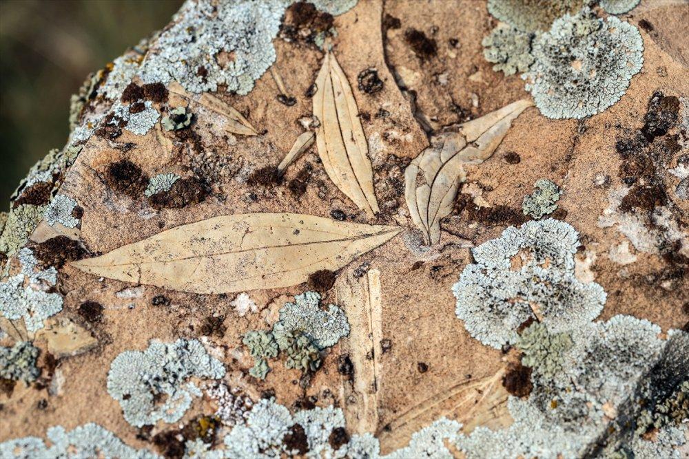 Kayaların İçindeki Şekiller Fosil Olabilir!