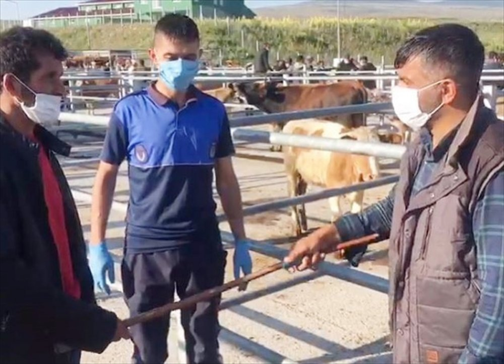 Ardahan | Canlı Hayvan Pazarı Yeniden Açıldı