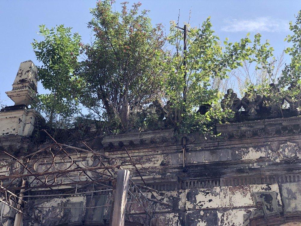Kars | Tarihi Binanın Üzerinde Ağaç Yetişti