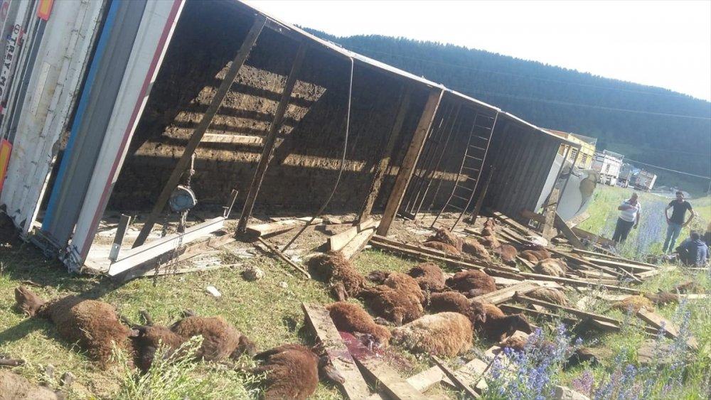 Kars'ta Kurbanlık Taşıyan Tırın Devrilmesi Sonucu 32 Koyun Telef Oldu