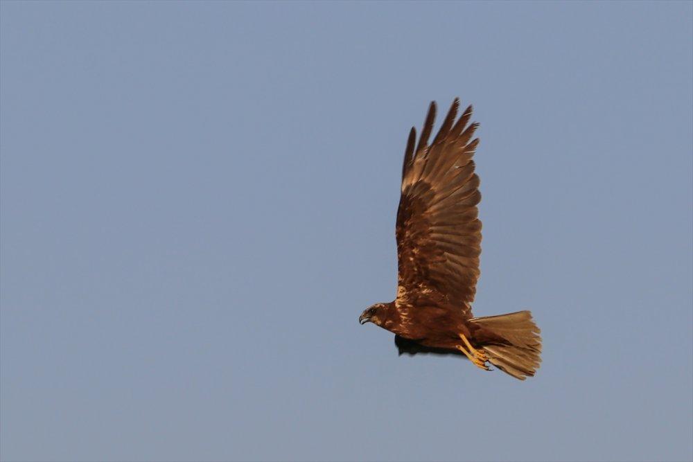Doğu'nun 'Kuş Cenneti' | Iğdır