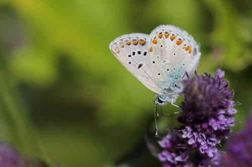 50 Sanatçı Uludağ'da Apollo Kelebeği'nin Peşine Düştü