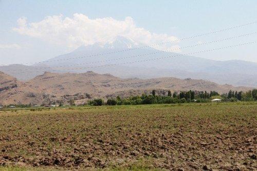 Ağrı Dağı'ndaki 386 Bitki Türü Kitaplaştırıldı