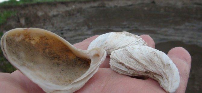 akyaka-deniz-kumu-deniz-kabugu-(2)(1).jpg