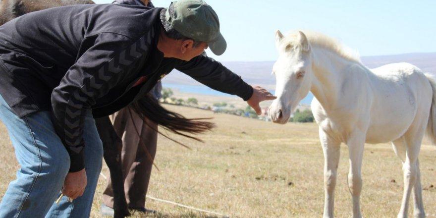 albino-beyaz-tay-3.jpg
