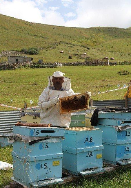 Anzer Balı'nda Rekor Üretim