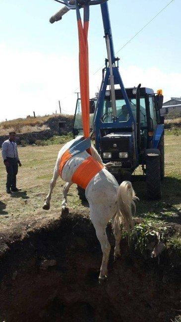 Çukura Düşen At, Halat Yardımıyla Kurtarıldı