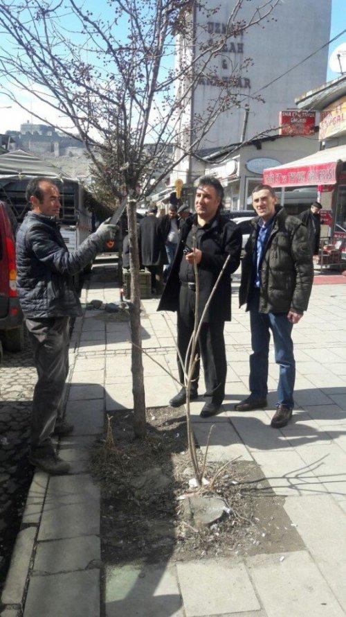 Kars Belediyesi Ağaçları Buduyor