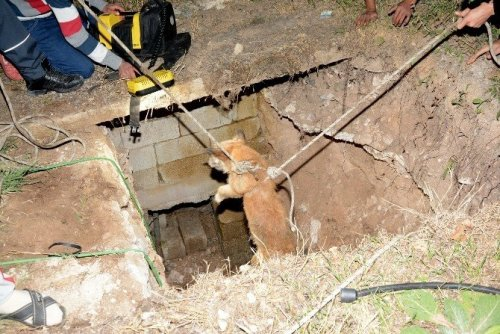 Kuyuya Düşen Köpek Afad Ekiplerince Kurtarıldı