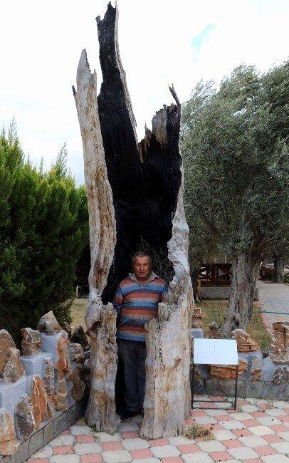 Odunları Sanat Eserine Dönüştürüyor