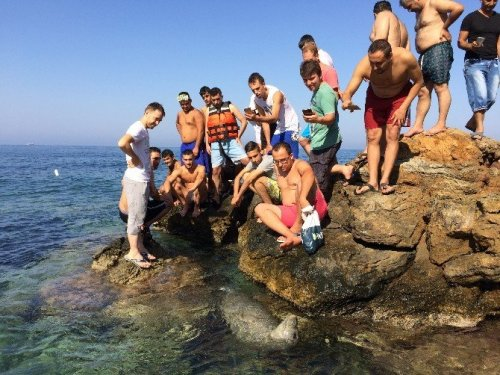 Plajda Ortaya Çıkan Davetsiz Misafir Şaşırttı